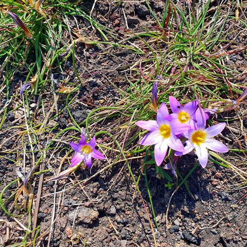 etna-est-fiori
